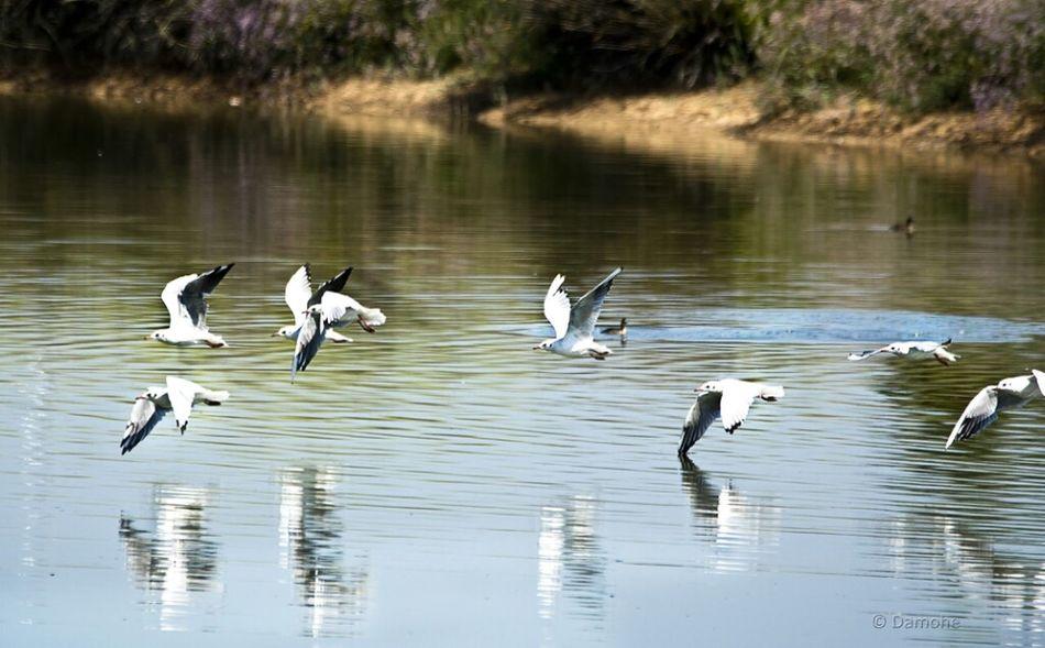 Nature Landscape Wildlife Flora Fauna