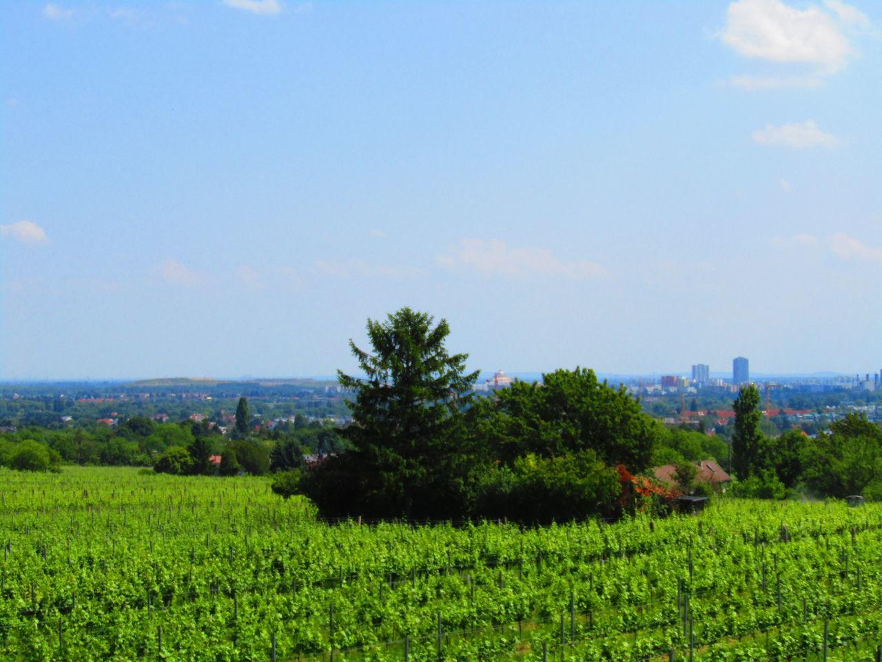 Growth Field Vineyard Vienna Stammersdorf Austria Weingarten Wein Wine Agriculture Landscape No People Green Color Tranquility