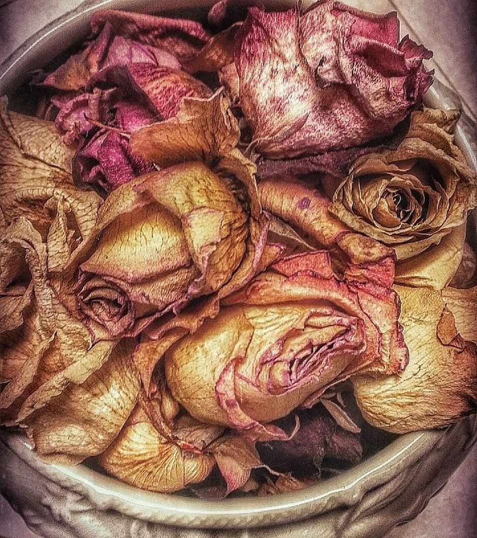 Kiss From A Rose On A Grave... Close-up Decaying Dead Flowers Dead Plant Floral Photography Dried Flowers Dead Roses Roses Decayed Beauty Floralphotography Millennial Pink