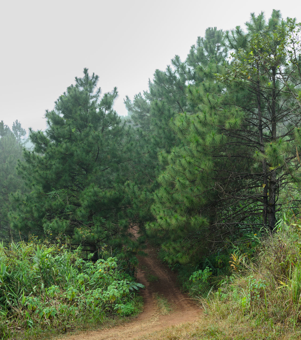 Day Mountain Nature No People Outdoors Phayao Road Thailand Trail Tree