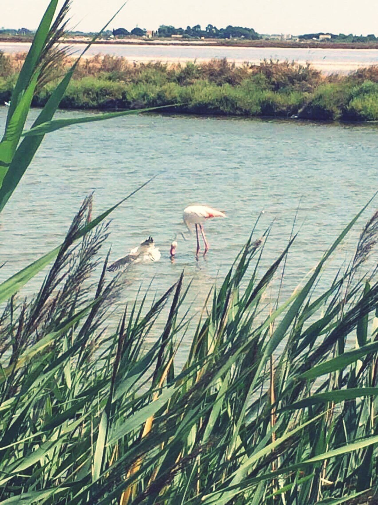 3 jours en Camargue premier vrai départ vers l'inconnu en Jumpy. Camargue Flamant Rose Animals In The Wild Roadtrip
