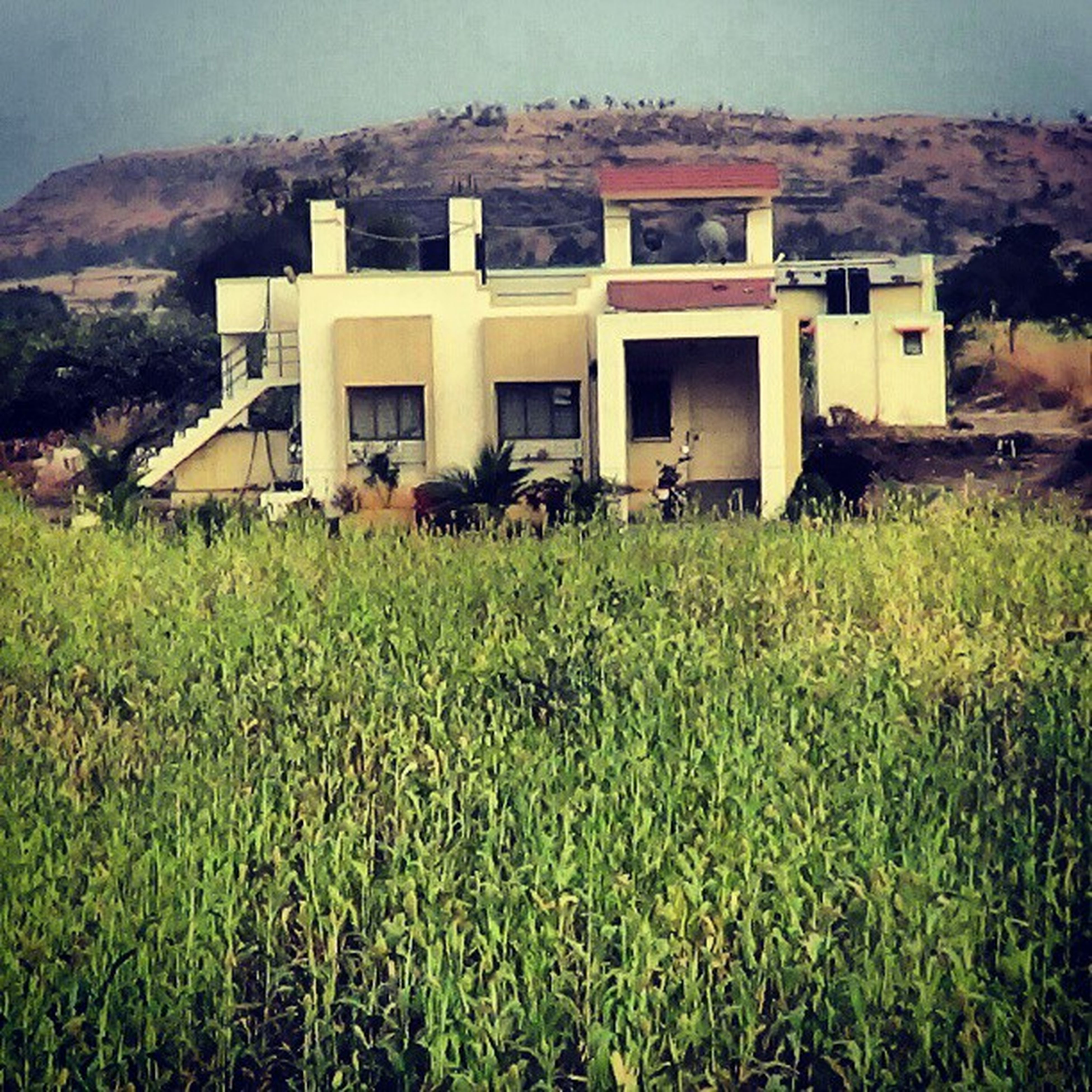 grass, building exterior, architecture, built structure, field, house, grassy, rural scene, plant, landscape, agriculture, growth, farm, nature, residential structure, day, outdoors, sky, abandoned, no people