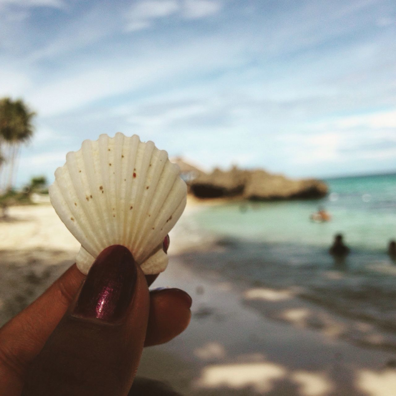 Seashell Seashell, By The Sea Shore Scallop Shells Sea And Sky Hello World Taking Photos Enjoying Life My Hand  My Happy Place  Beach Life Eyeem Bohol Seashore Beaching Stressreliever Fresh Air And Sunshine Fresh And Clean Away From The Hustle Quiet Moments My Freedom EyeEm Nature Lover Eyeem Philippines Mobile Photography Photography ♥