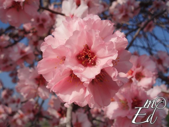 Floral Explosion Macro Flowers Spring Nature Pink Flower Collection Taking Photos Colors