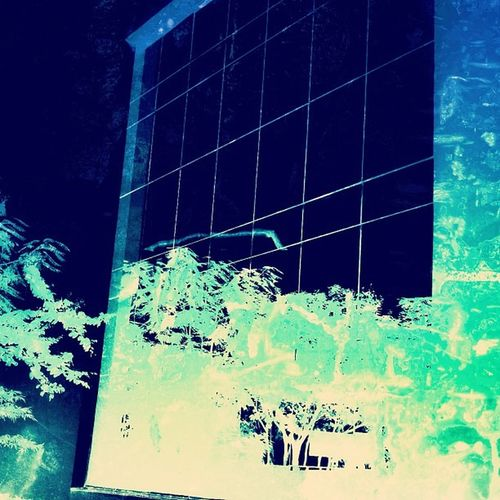 Distorted Reflection of a tree on the tinted outer glass of a building at my Workplace . Simplicity Recursively Distorted beyond Recognition