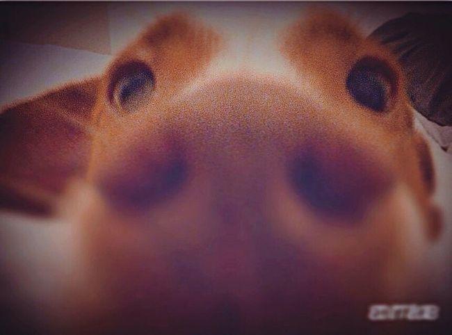 "Cooper : ""what is it ?!"" 👀👃🏾🤔🐶 Taking Photos Enjoying Life Dog Nose Eyes Eyes Watching You Photography"