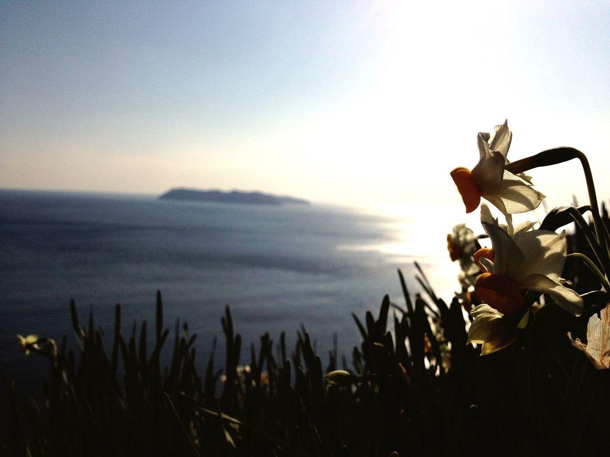 in Awaji ? Awaji Hyogo Japan Flowers Narcissus Ocean View