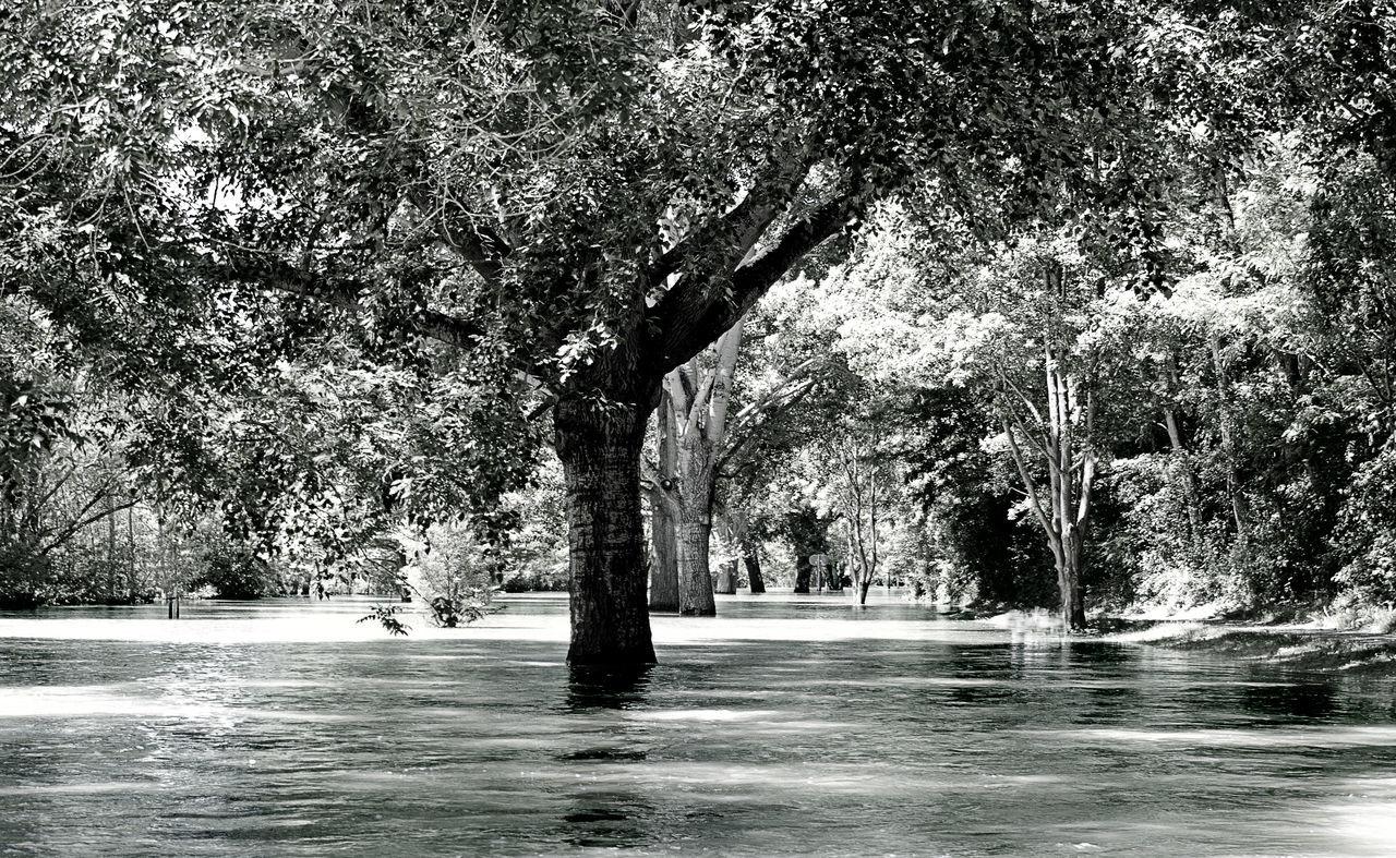 Black & White Hochwasser Main Nature No Person Once In A Lifetime Water Würzburg