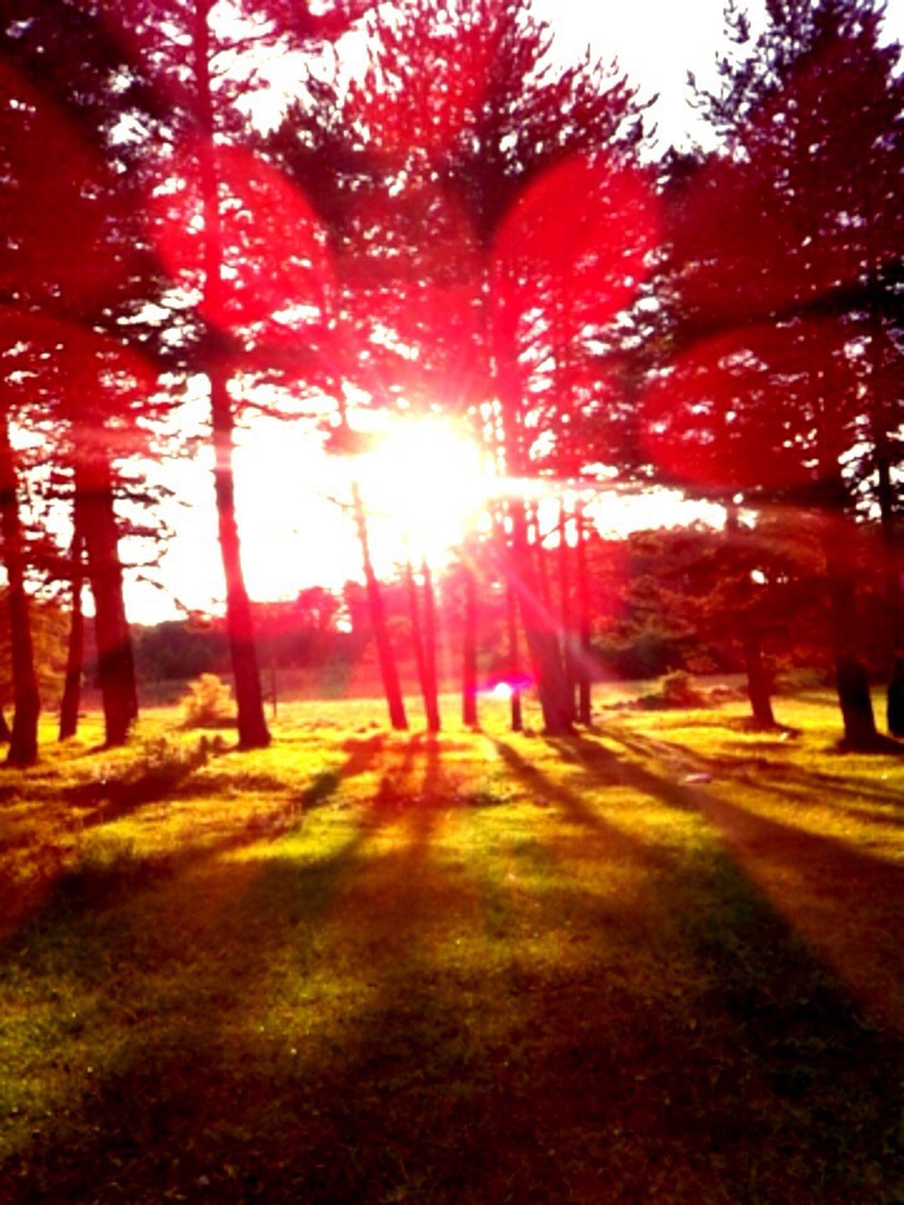 tree, sun, sunlight, sunbeam, tranquility, tranquil scene, lens flare, tree trunk, nature, sunset, beauty in nature, scenics, growth, park - man made space, orange color, shadow, outdoors, branch, landscape, autumn