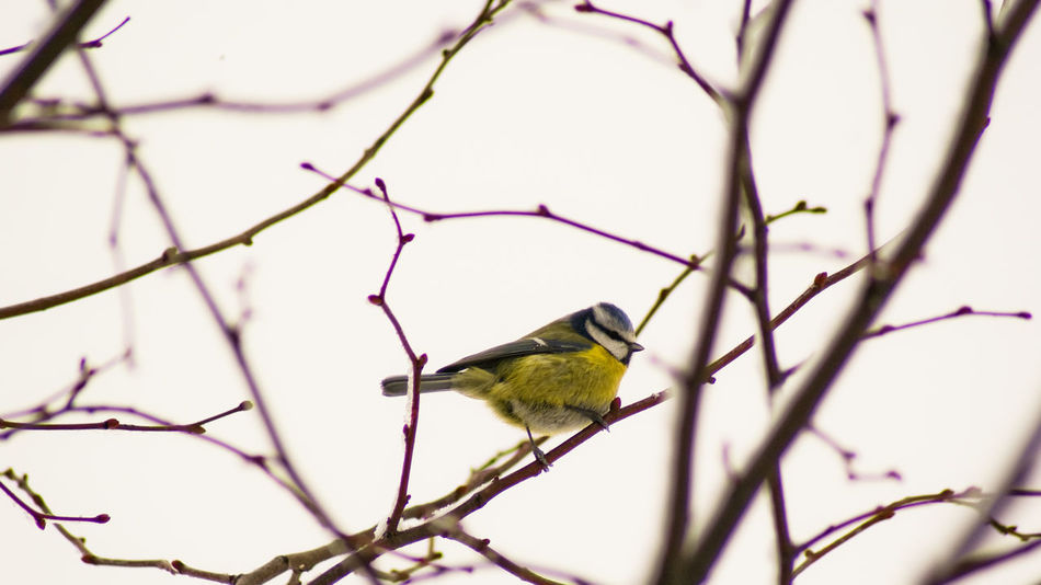 Beautiful stock photos of tree, Animal Themes, Animals In The Wild, Bare Tree, Bird