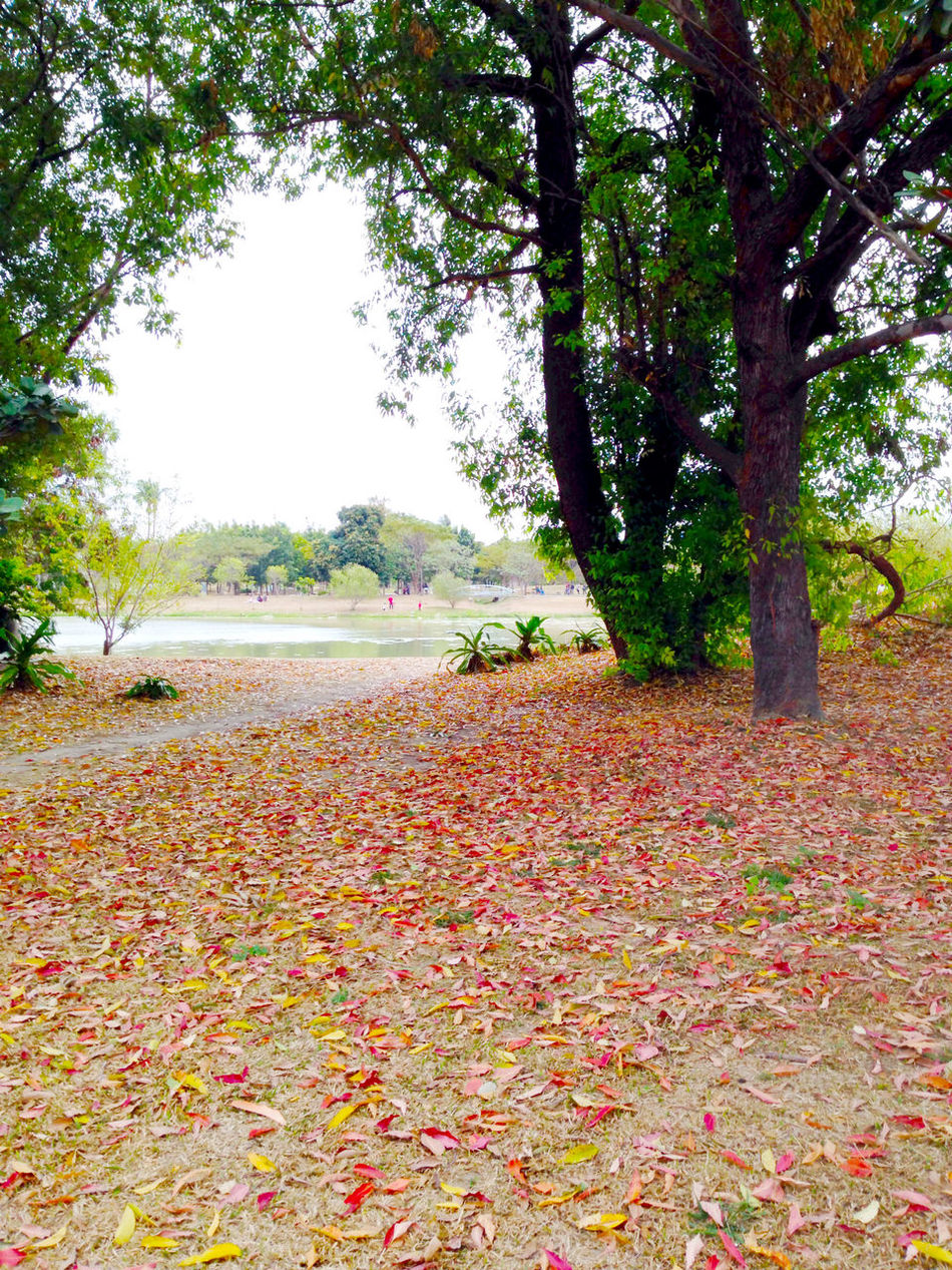Defoliation Trees