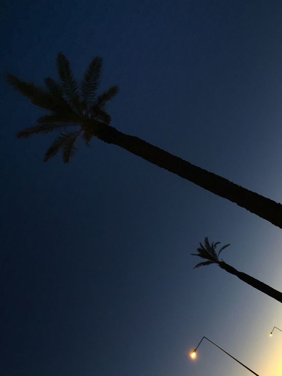 Palm Tree Tree Low Angle View Silhouette Clear Sky Blue Nature Tree Trunk No People Beauty In Nature Moon Outdoors Scenics Sky Night Dawn No Filter No Edit/no Filter Portugal Algarve Lookingup Streetlights