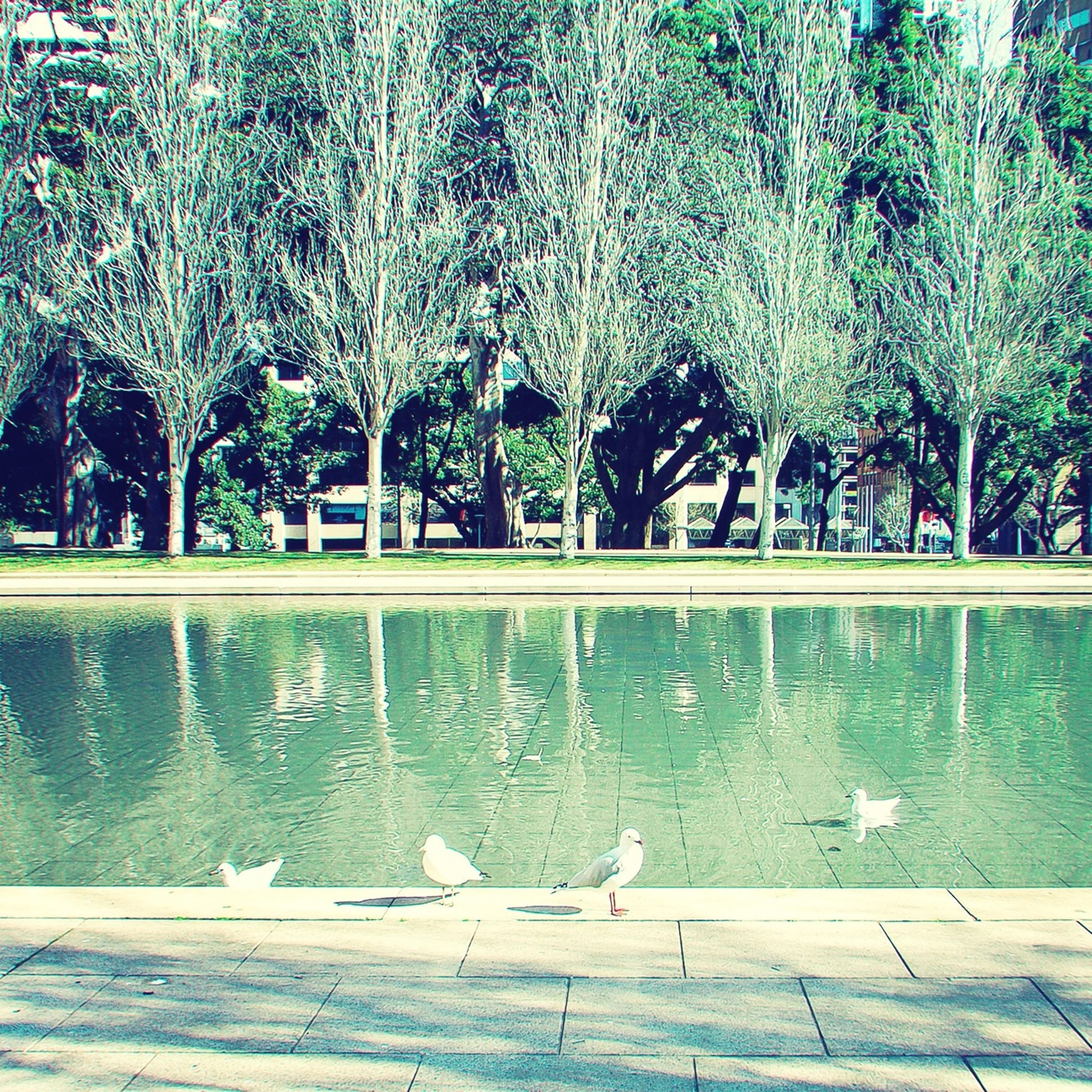 tree, bird, water, animal themes, animals in the wild, wildlife, nature, growth, park - man made space, pond, swimming, lake, beauty in nature, reflection, fountain, day, tranquility, outdoors, green color