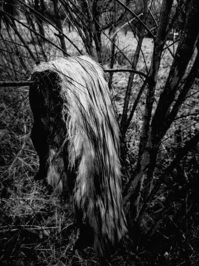 lost fur trimming, back in nature Lostthings Fur Bnw Rural Scene The Week On EyeEm Animal Themes Tree No People Nature Outdoors Day Close-up