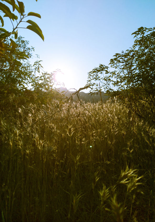 Nature Photography Nature_collection Hiking Trail Sunshine View Hillside Grass