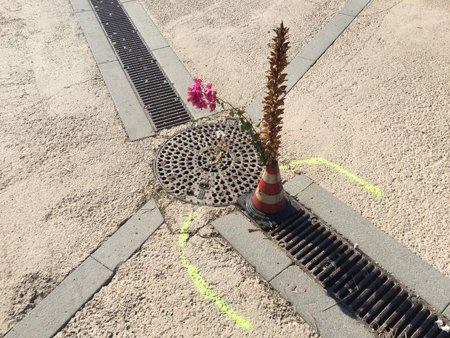 The Road Cone , Flower & Manhole Cover in the Sun Crossroads