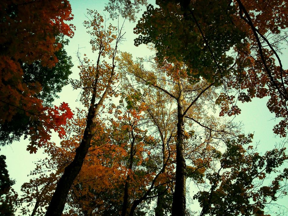 Trees Treescollection Walking Colors Of Autumn ♥