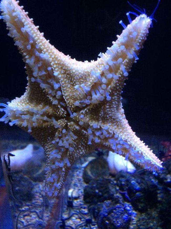 Underthesea Ozeaneum Stralsund  Seestern Wonderfull Patrikstar Eyeemphoto Brightsideoflife