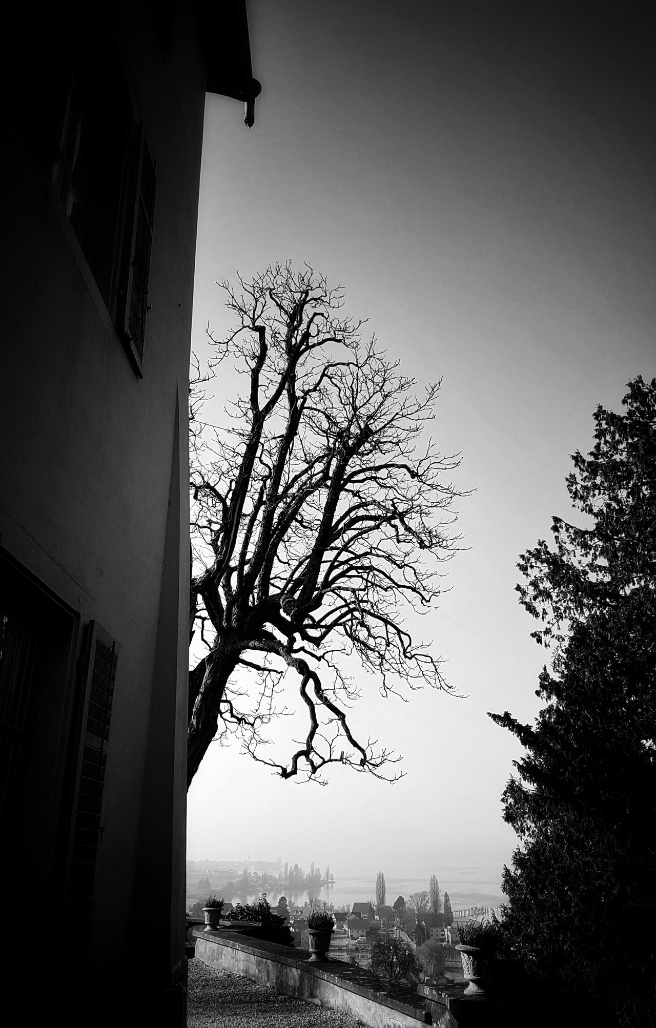 Tree Silhouette No People Low Angle View Built Structure EyeEm Black&white! Black&white Old House Old Buildings Old Architecture Architecture_collection Black & White Mypointofview Monochrome Photograhy Taking Photos Monochrome _ Collection Light And Shadow Castle Blackandwhite Photography Castle View  Castleporn Tree Building Exterior