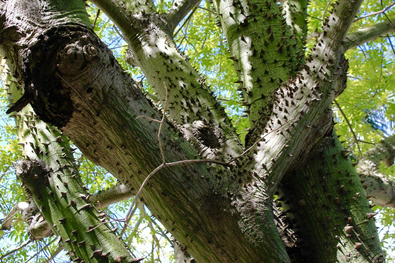tree, tree trunk, growth, nature, green color, branch, wood - material, low angle view, day, no people, outdoors, forest, climbing, beauty in nature, animal themes, close-up