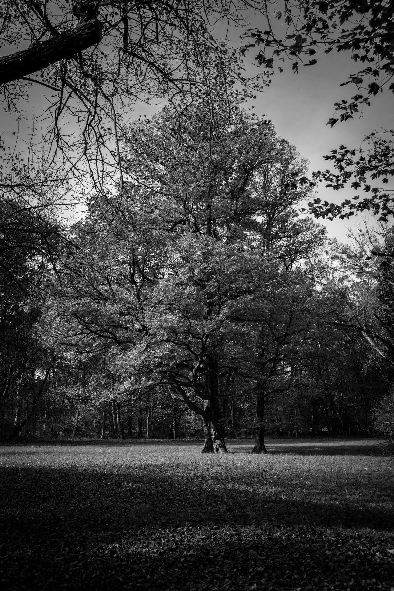 Herbststimmung Herbst Schwarzweiß Bäume Outdoors Tree Natur Pur Natur München Memories