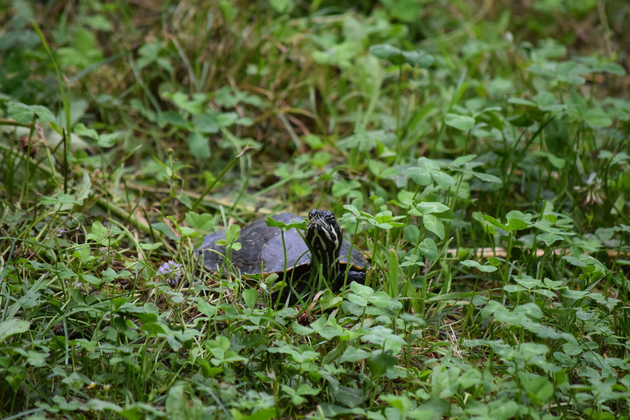 Animal Themes Animals In The Wild Beauty In Nature Day Florida Turtle Focus On Foreground Fragility Full Frame Green Green Color Growth Nature No People One Animal Perching Selective Focus Tortue De Floride Turtle Wildlife Zoology