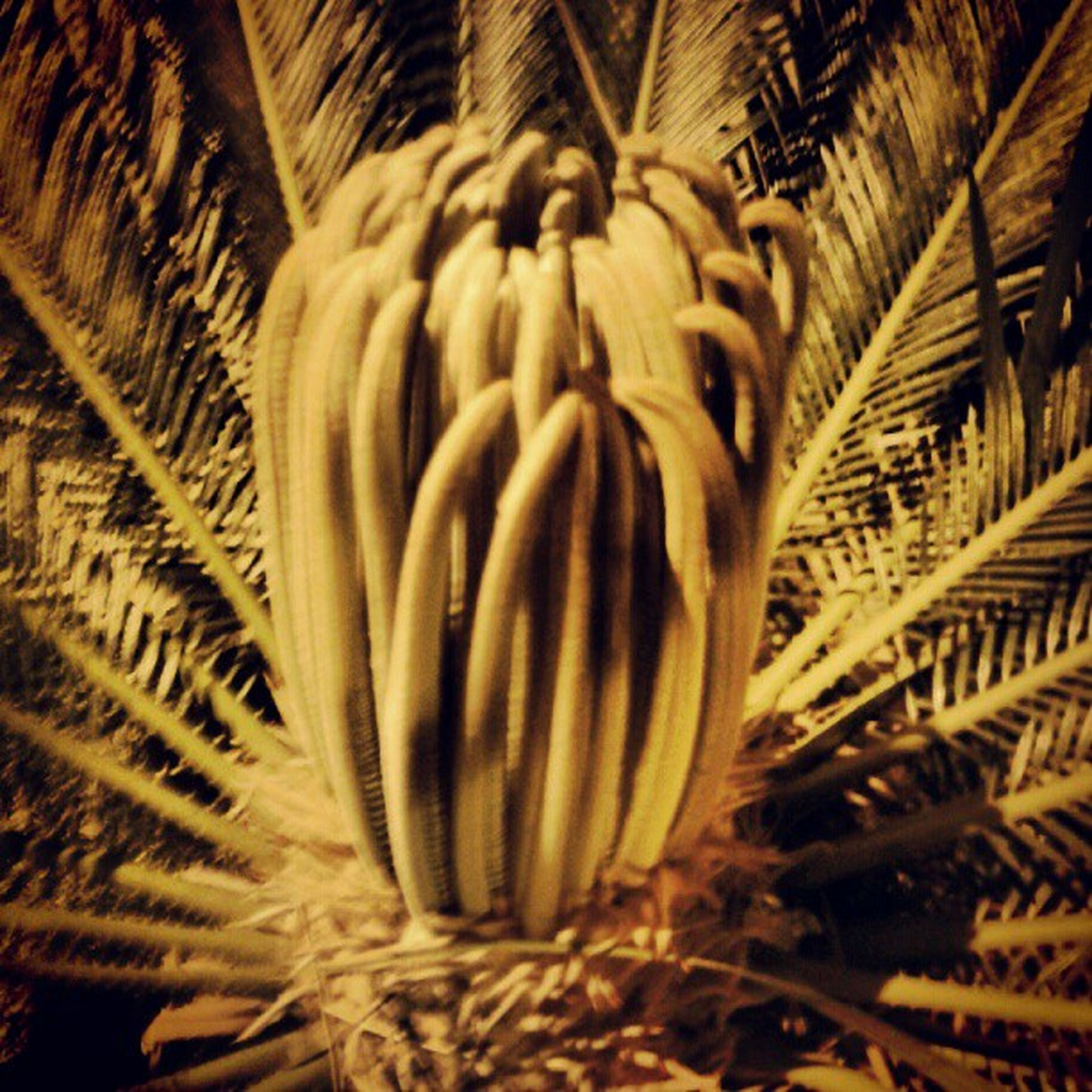 close-up, pattern, growth, selective focus, nature, no people, indoors, full frame, backgrounds, plant, palm leaf, day, thorn, spiked, natural pattern, textured, focus on foreground, cactus, dry