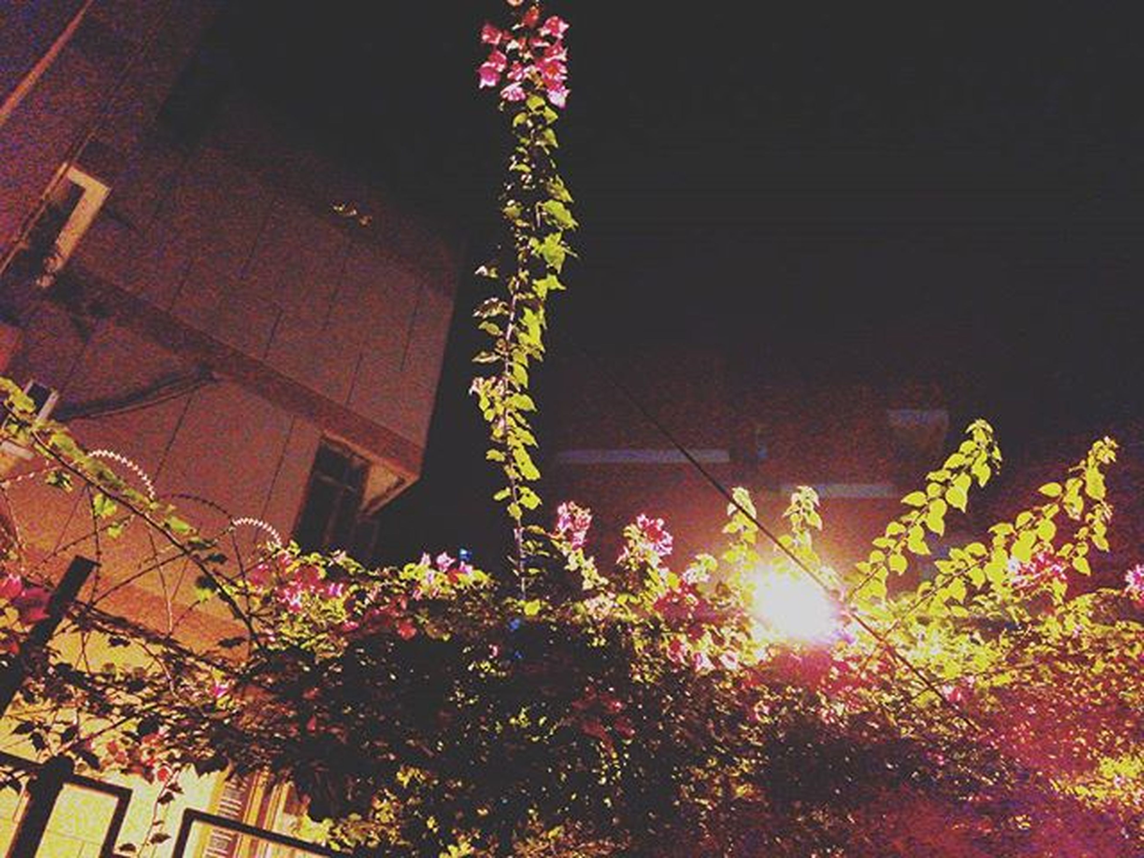 low angle view, building exterior, built structure, architecture, growth, tree, flower, illuminated, night, branch, plant, nature, house, lighting equipment, sunlight, no people, outdoors, clear sky, beauty in nature, street light