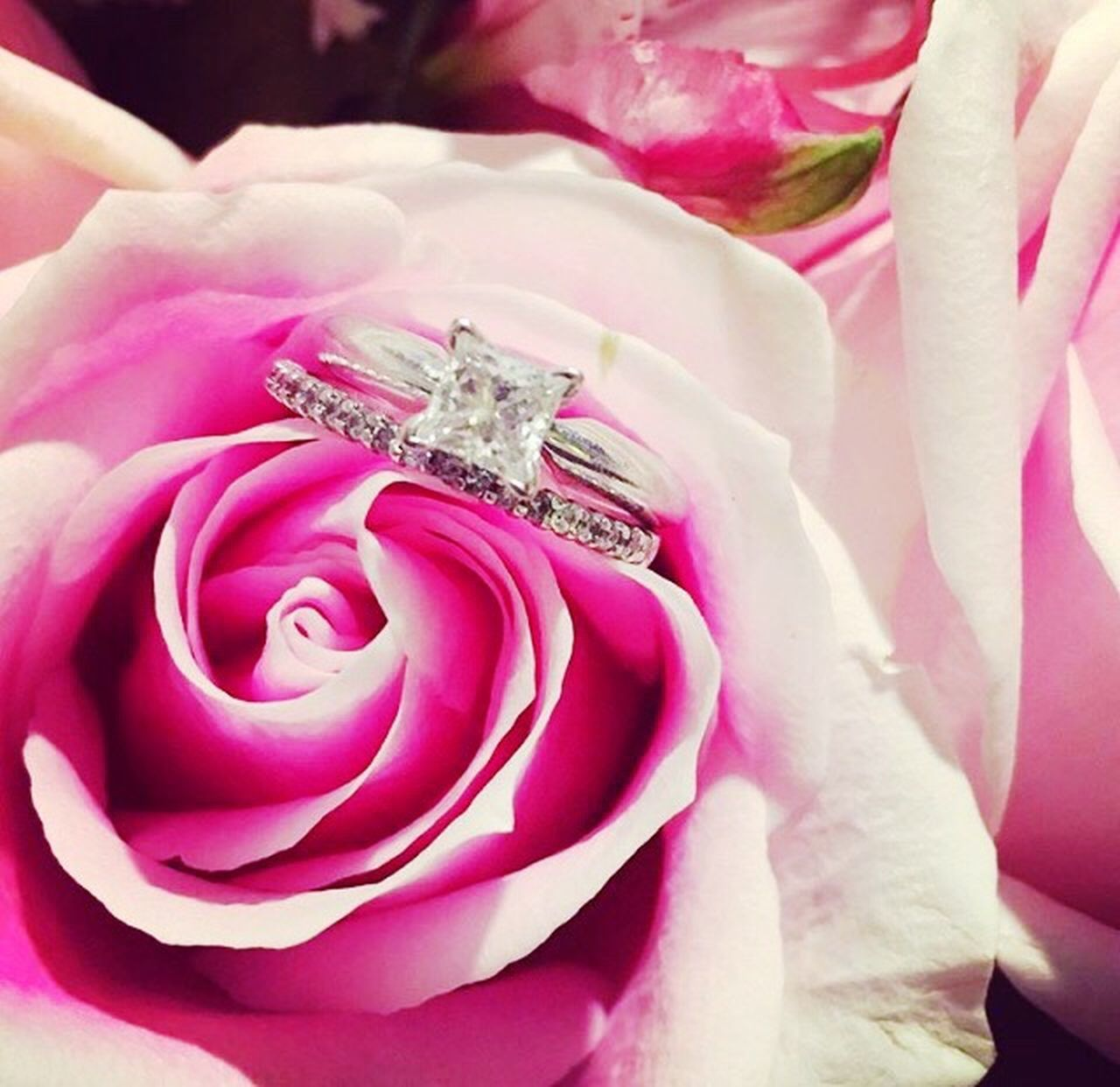 flower, pink color, petal, wedding, rose - flower, flower head, close-up, fragility, nature, beauty in nature, love, no people, diamond ring, freshness, backgrounds, day, outdoors