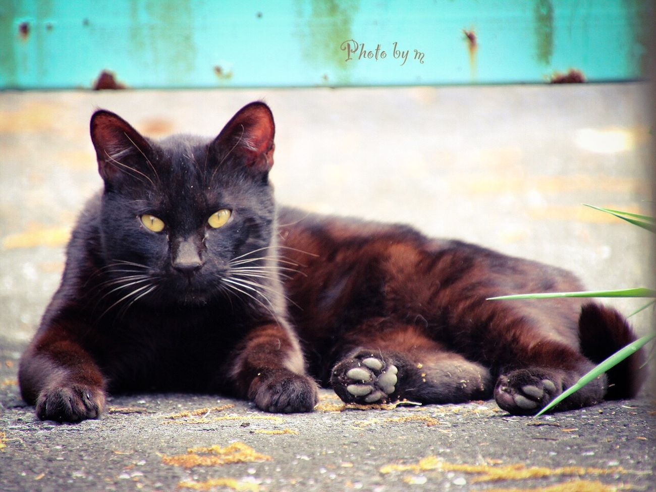 Cat Stray Cat 野良猫 Cat♡ 猫 Animal 黒猫Love Black Cat Cat Lovers Photography