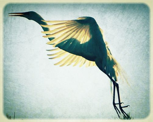 Birds of EyeEm by English