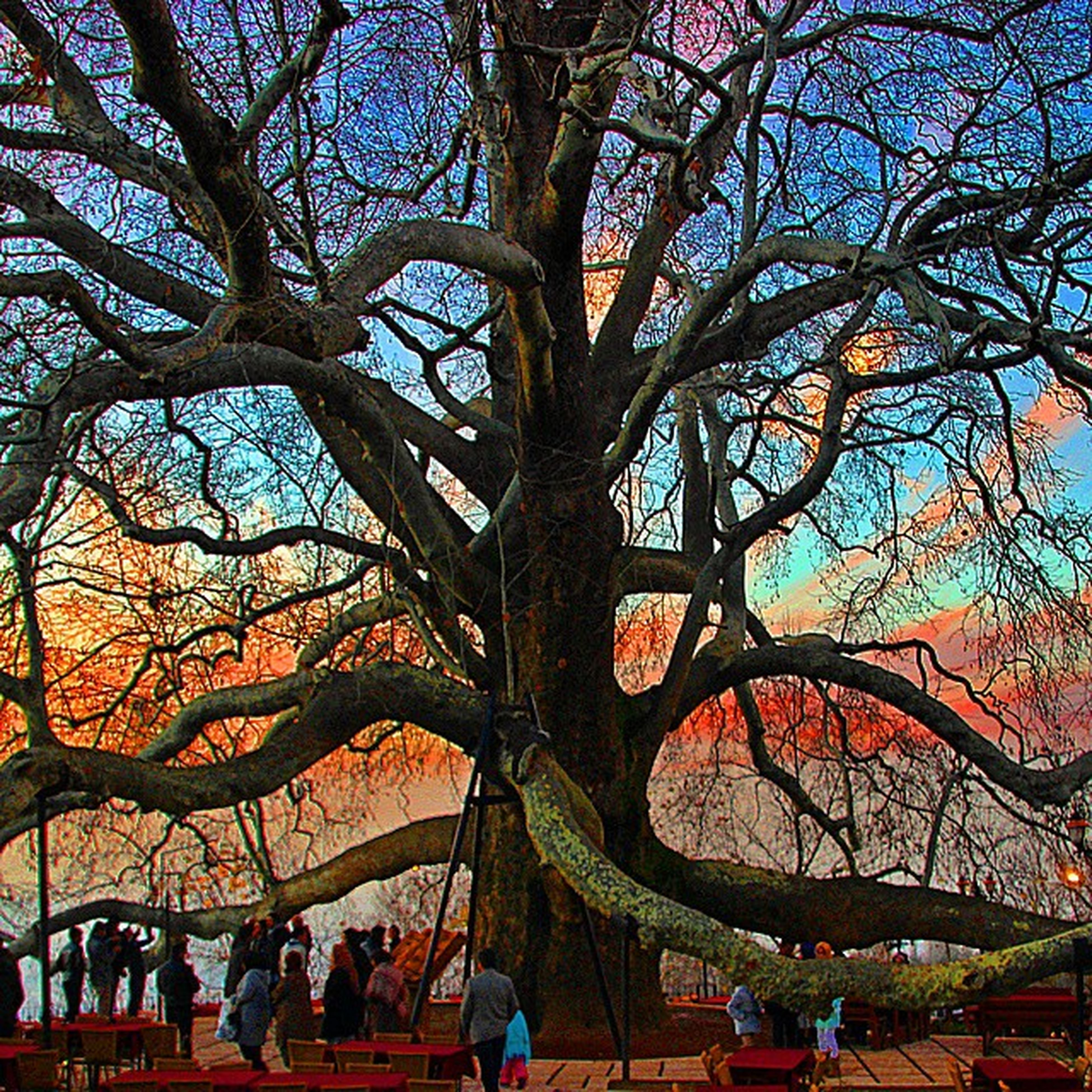 tree, large group of people, lifestyles, bare tree, leisure activity, person, men, branch, sky, park - man made space, built structure, architecture, outdoors, nature, tourism, low angle view, arts culture and entertainment, travel destinations, tourist