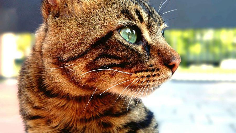 Cat Il Mio Micio! Ti Voglio Bene First Eyeem Photo