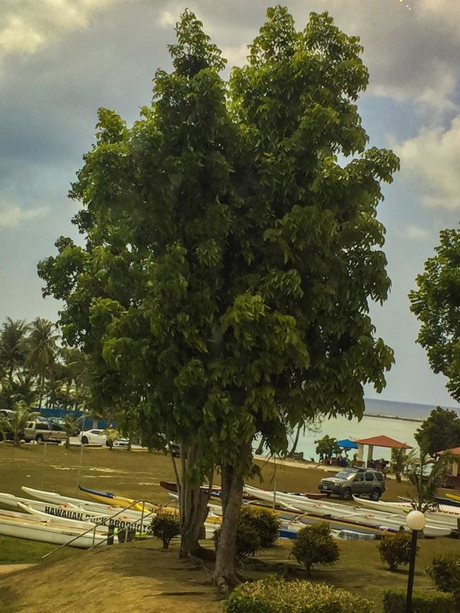 Check This Out Hanging Out Hello World Taking Photos Enjoying Life Iphone 6 Plus IPhone Photography IPhoneography Motus Natura Iphonephotography GUAM..a Place I Call Home Hot Day Trees Tree Green Getty X EyeEm The Great Outdoors - 2016 EyeEm Awards Nature's Diversities