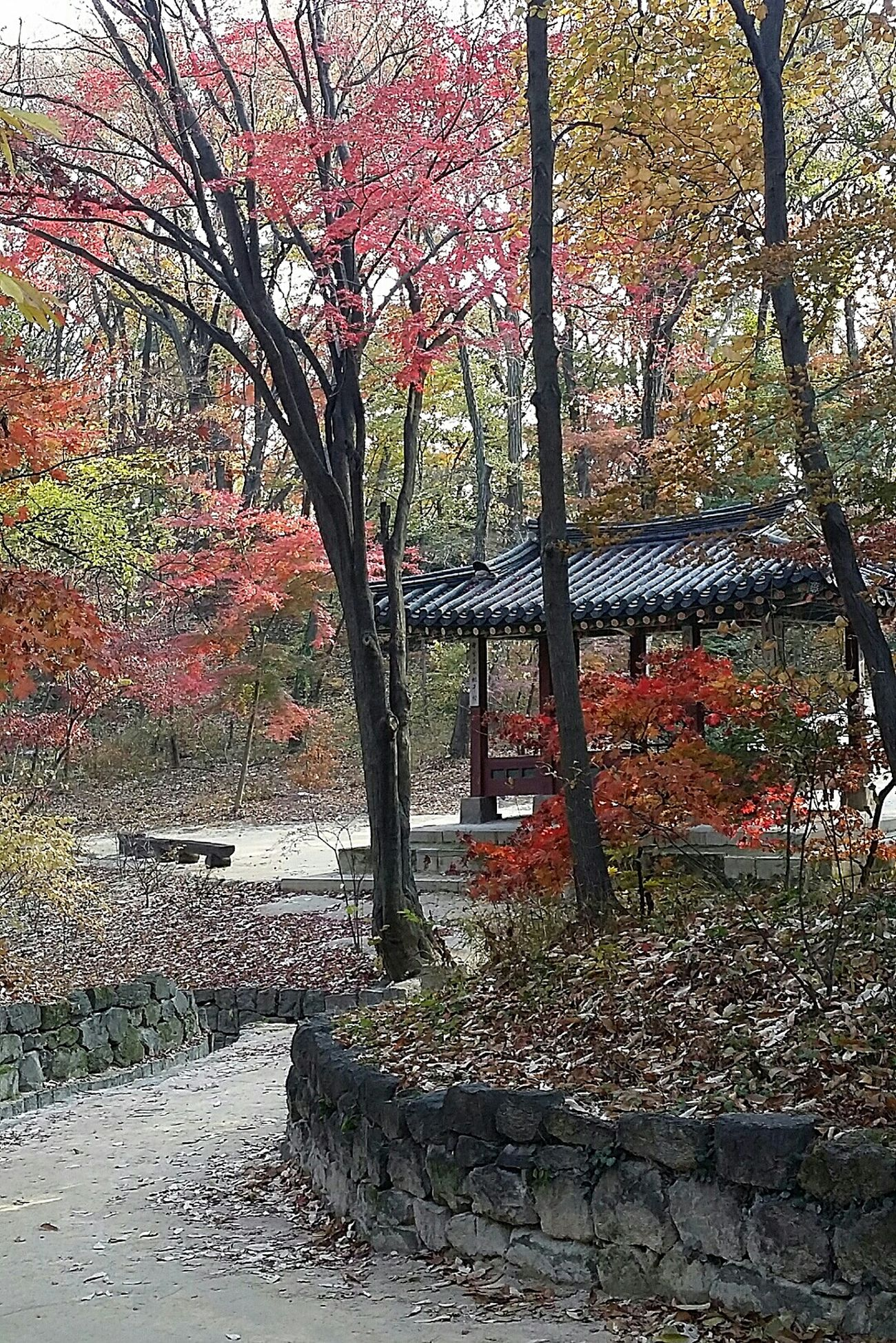 Beautifulkorea Autumn2014 Autumn Colours Seasons Nature Secret Garden Changdeokgung Palace Seoul Travel Photography