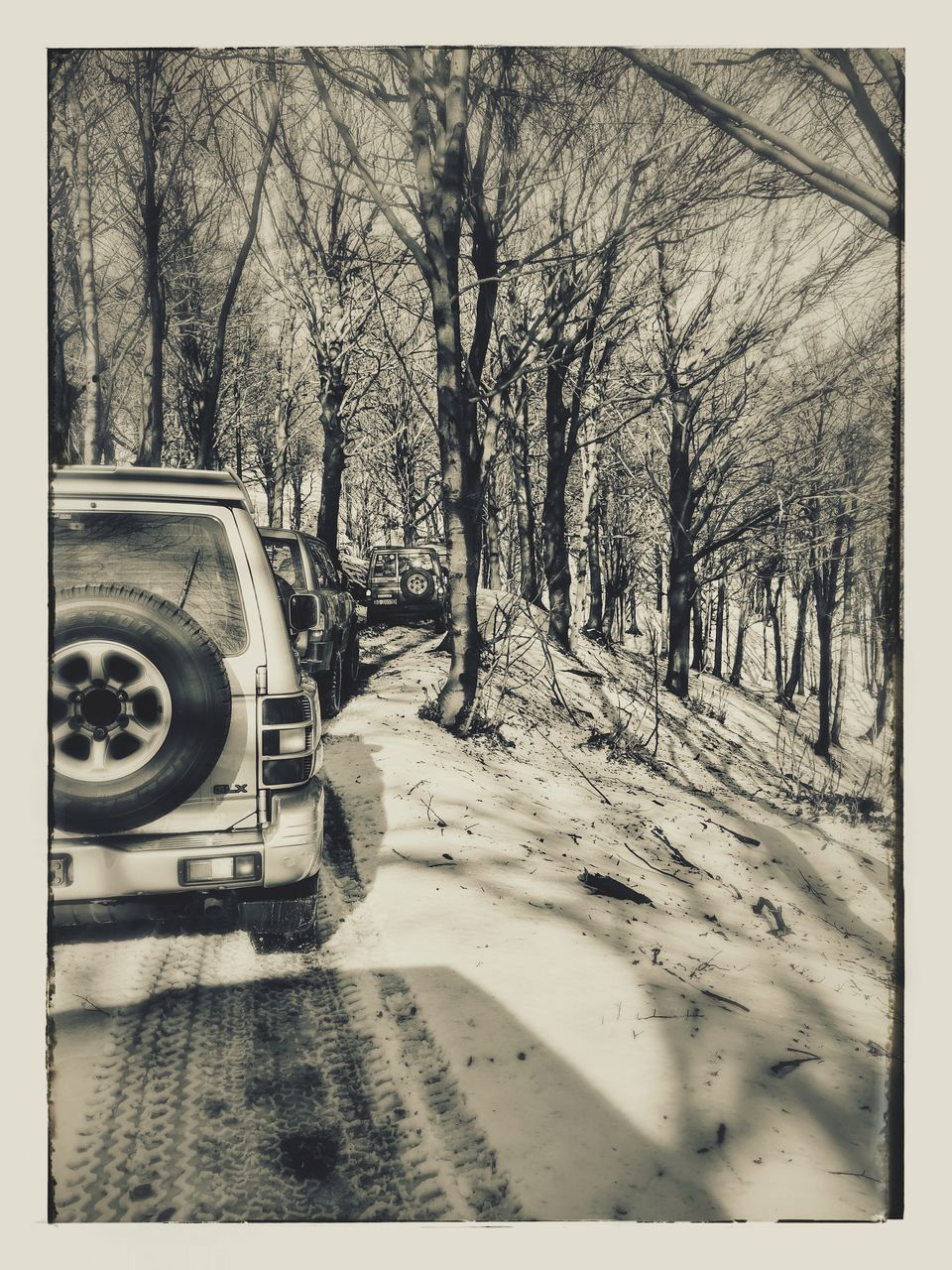 tree, land vehicle, car, transportation, bare tree, nature, no people, winter, branch, day, cold temperature, outdoors