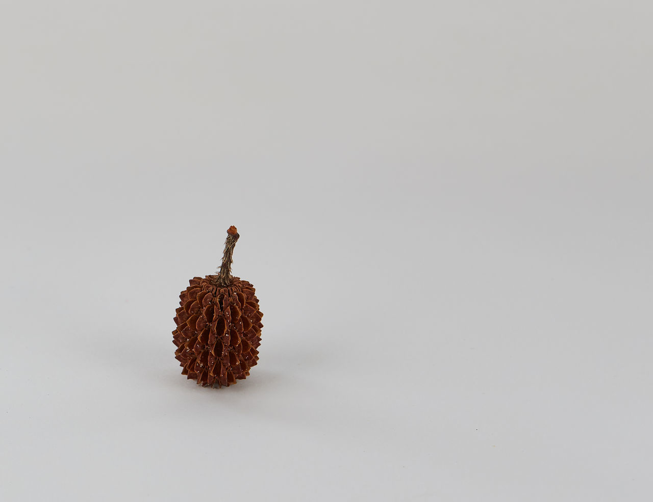 A casuarina seed pod place at left side bottom rule of thirds. Casuarina Casuarina Seed Casuarina Tree See Casuarinatree Color Of Casuarina Seed Hanging Out Portrait Seed Pods