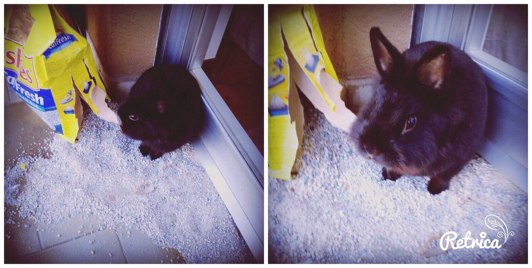 Conejo? My Rabbit So Addorable.....<3