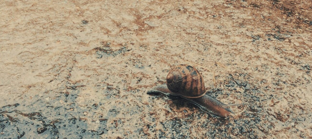 Animal Themes One Animal Animals In The Wild Nature Snail Escargot Rainy Days