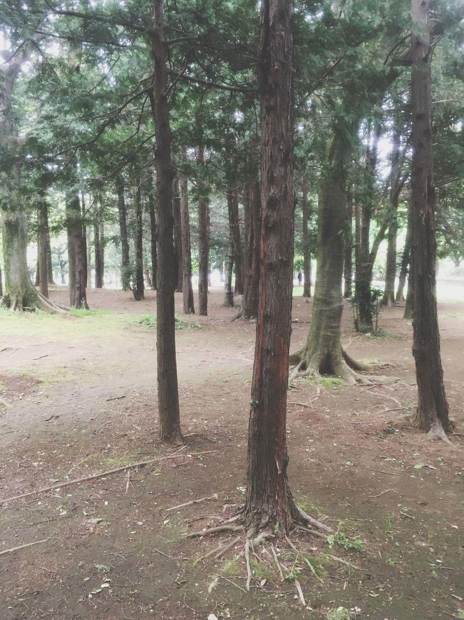 My Favorite Place Park