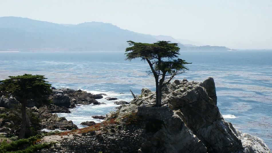 The Lone Cypress 17-Mile Drive Scenic View Scenic Road through Pebble Beach California Tree_collection  EyeEm Gallery EyeEm EyeEm Best Shots The KIOMI Collection