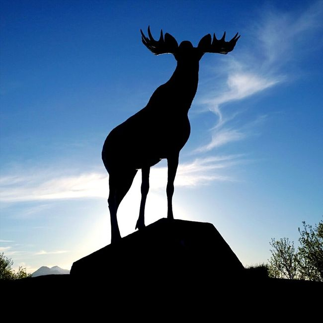 Moose Statue. Moose Elk Elkhorn Statue Statues Statue Lover Statues And Monuments Animals Skies Skies And Clouds Clouds And Sky in Norway