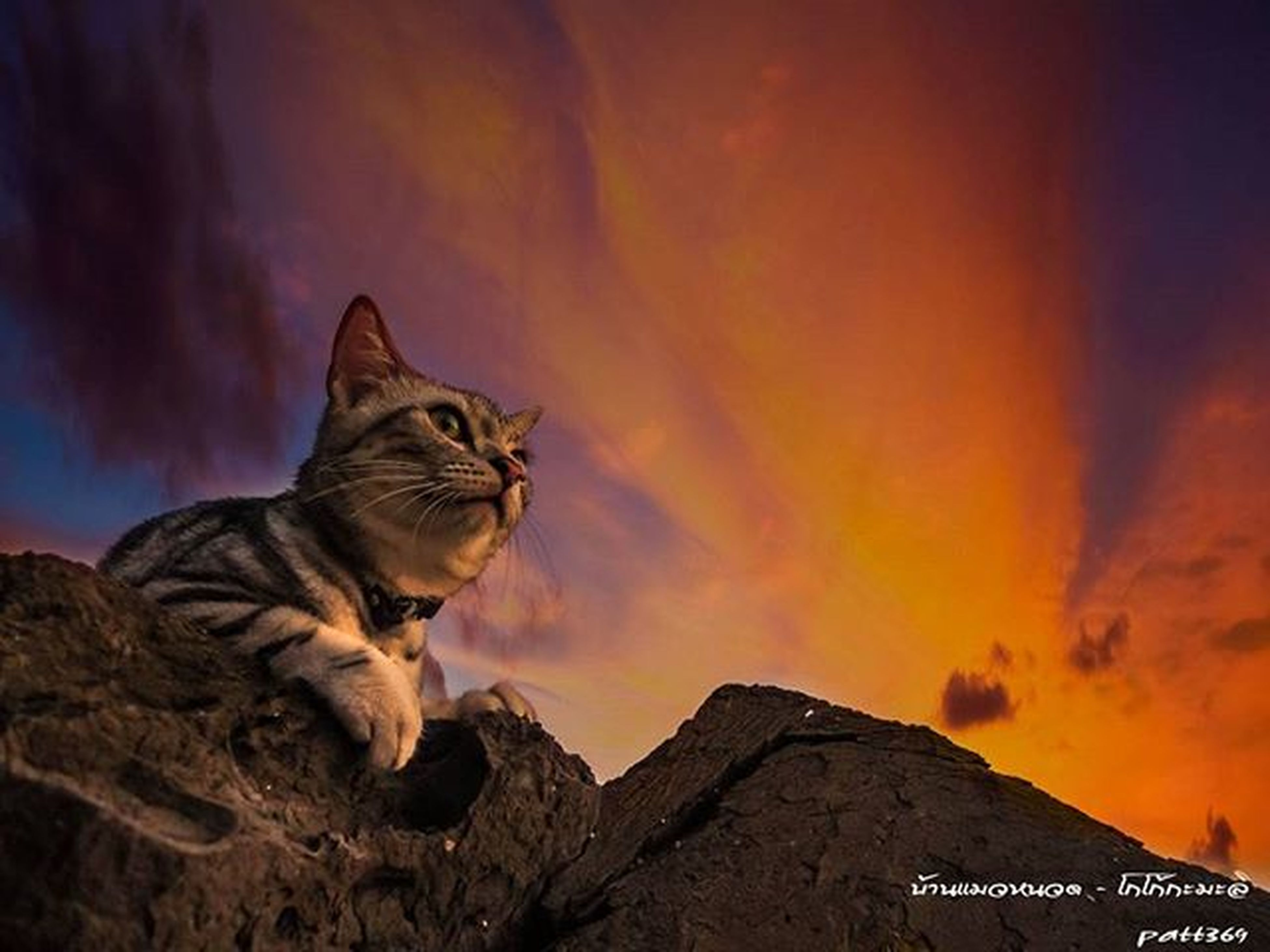 one animal, sky, animal themes, sunset, cloud - sky, orange color, low angle view, mammal, mountain, nature, cloudy, beauty in nature, rock - object, cloud, domestic animals, silhouette, pets, weather, outdoors, scenics