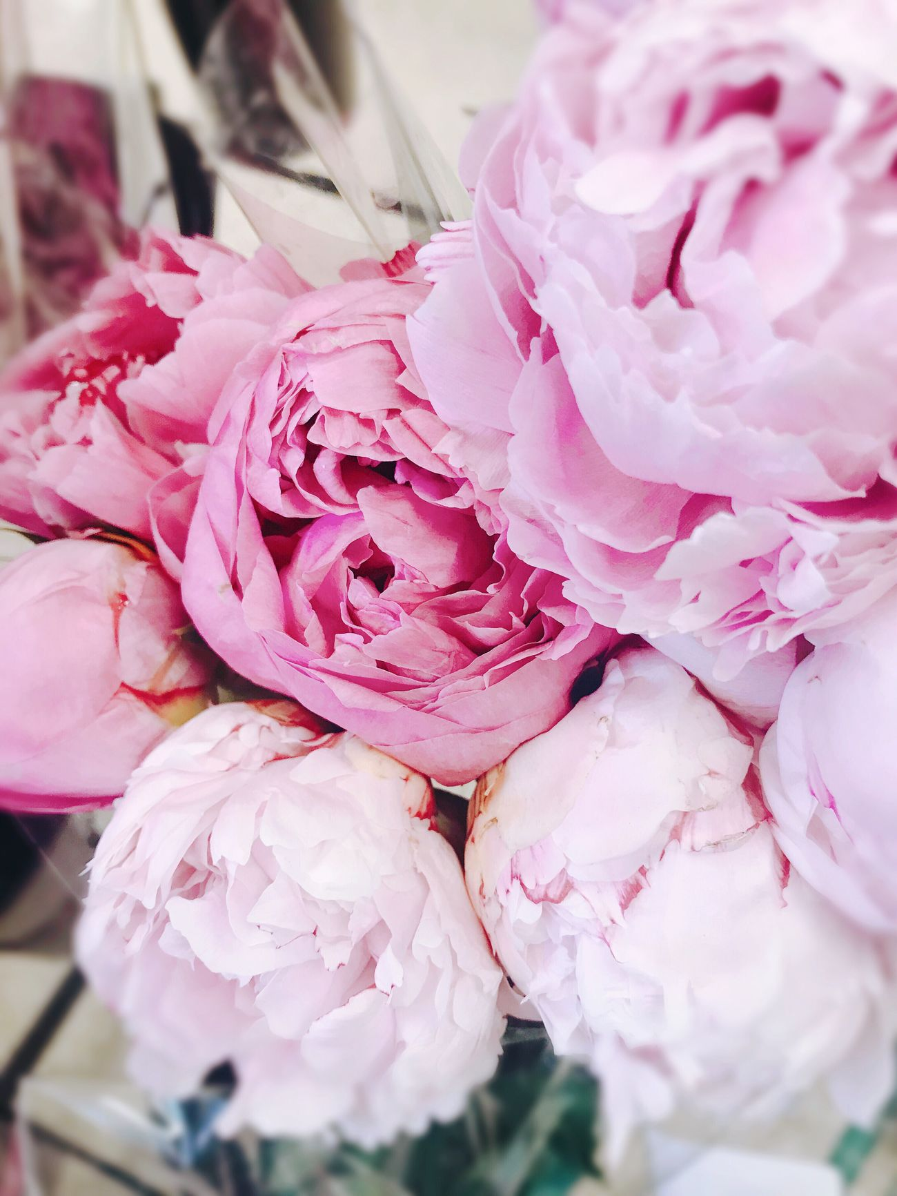 Peony. Flower Petal Pink Color Beauty In Nature Freshness Nature Fragility Close-up Flower Head No People Day Springtime Outdoors Peony  BYOPaper!