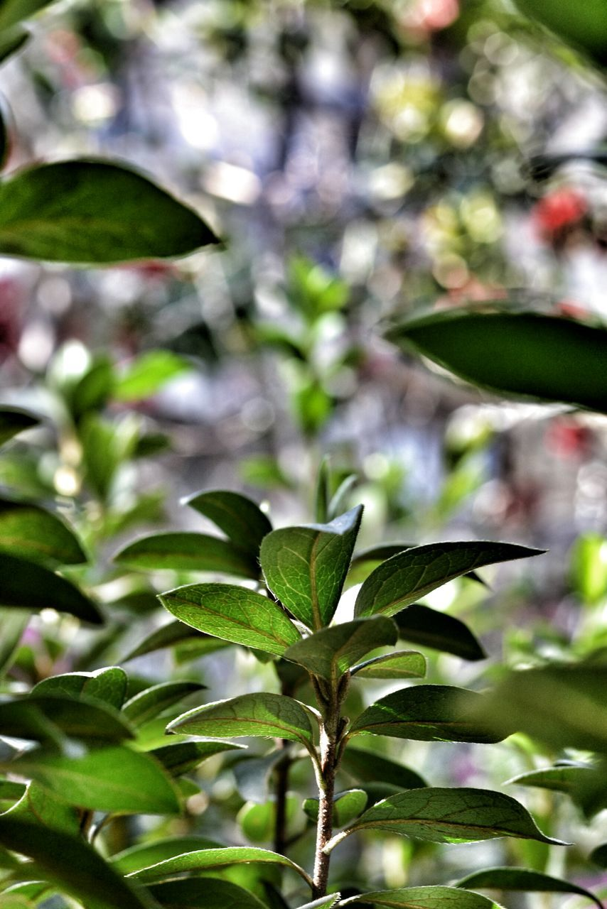 growth, plant, leaf, nature, no people, close-up, outdoors, day, freshness