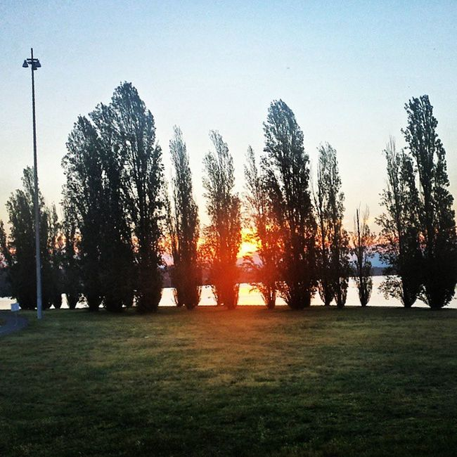 Trees, the Lake and Sunset