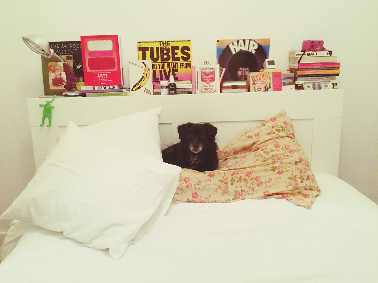 Someone is trying to steal my Bed // Polite Dog ... Or Not