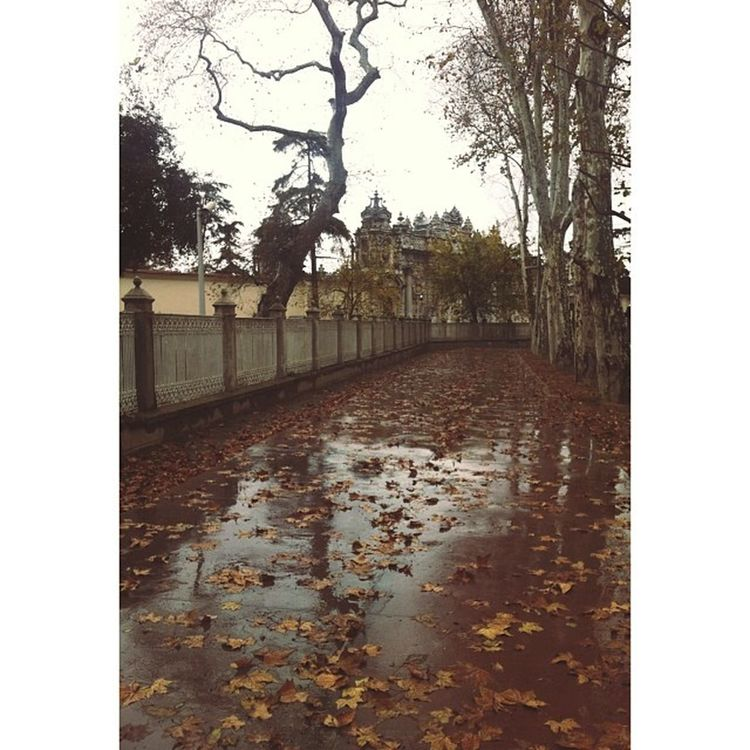 Okula gitmemek bu ka güzelmiş En Sevdigim Mevsim Istanbul be