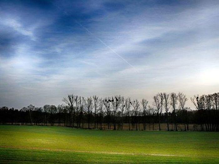 Field Sky Tree Landscape Green Blue Clouds Landscape_lovers Landscapes Skylovers Photographer📷 Photoblogger Photo Pic Panasoniclumix Panasonic  Lumix Like4like Likeforlike L4l Follow4follow Followforfollow F4F