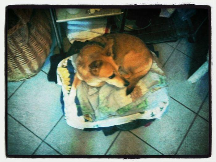 Wäschewachhund! :-)